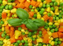 Diced vegetables Stock Images