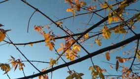 Dicendo arrivederci all'autunno Fotografia Stock Libera da Diritti