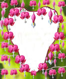 Dicentra Spectabilis flowers. Heart shaped Dicentra Spectabilis flowers Royalty Free Stock Photography