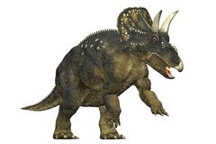 Diceratops dinosaur attacking. Royalty Free Stock Photos