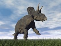 Diceratops dinosaur - 3D render Royalty Free Stock Images