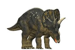 Diceratops dinosaur grazing Stock Photo