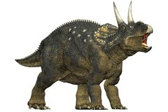 Diceratops dinosaur roaring. A herbivorous dinosaur from the Maastrichtian age. Closeup head shot Isolated on white background. Clip art cutout illustration Royalty Free Stock Photos