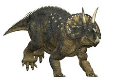 Diceratops dinosaur running Royalty Free Stock Photos