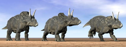 Diceratops dinosaurs in the desert - 3D render Stock Photos