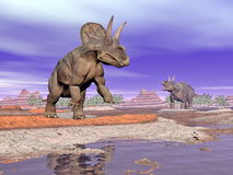 Diceratops dinosaurs in nature - 3D render Royalty Free Stock Image