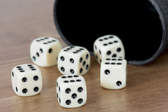 Dices. With cup on the table Stock Photo