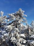 Dicha del invierno imagen de archivo libre de regalías