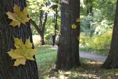 Dichiarazione di autunno di amore Fotografia Stock Libera da Diritti