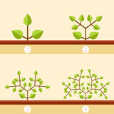 Dichotomous branching plants banner. Vector image of the Dichotomous branching plants banner Royalty Free Stock Images
