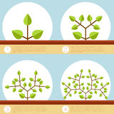 Dichotomous branching plants banner. Vector image of the Dichotomous branching plants banner Stock Photography