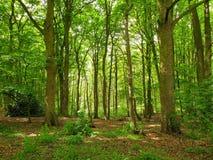 Dicht bewaldeter Wald von neuen Wachstumsbäumen lizenzfreies stockbild