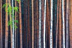 Dicht bos stock fotografie