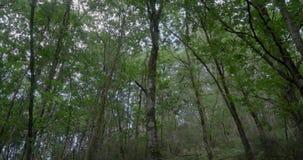 Dicht bos in het noorden van Spanje stock video