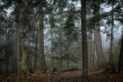 Dicht bos van pijnboombomen Royalty-vrije Stock Fotografie