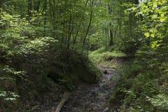 Dicht boslandschap met stroom Stock Afbeeldingen