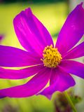 Dicht detail van een purpere bloem stock afbeeldingen