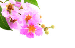 Dicht detail van Roze bloemen Stock Fotografie