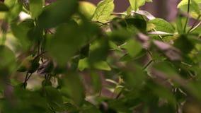 Dicht die struikgewas van installaties in serre worden gekweekt Het landbouwbedrijf van de kinderdagverblijfinstallatie stock footage