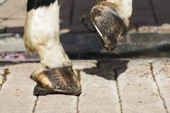 Dicht getoonde paard` s hoeven stock afbeeldingen