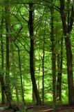 Dicht groen bos stock afbeeldingen