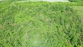 Dicht groen bos in de zomerdag stock footage
