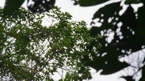 Dicht omhoog geschoten van knuppels die op daglicht vliegen stock videobeelden
