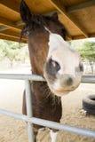 Dicht Paardgezicht Royalty-vrije Stock Foto's