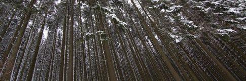 Dicht sneeuw behandeld pijnboombos stock afbeelding