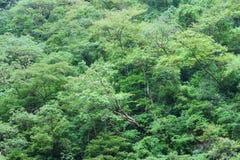 Dicht tropisch regenwoud Stock Afbeelding