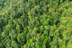 Dicht tropisch regenwoud in Maleisië stock foto's