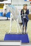 Dichtbij bevrijdend Hall Beautifully Woman-jockey in een donkerblauw kostuum aan een paard Internationale Paardtentoonstelling Royalty-vrije Stock Afbeeldingen