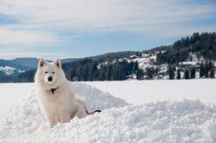 Dichtbij een de wintermeer in Alpen Stock Foto