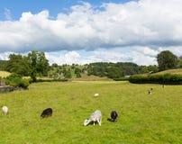 Dichtbij Sawrey-de mening van het dorpsland door Hawkshead Lake Districts vroeger huis aan Beatrix Potter Royalty-vrije Stock Afbeeldingen