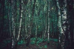 Dichte Bäume des Waldes stockfoto