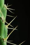 Dichte cactus Royalty-vrije Stock Afbeelding