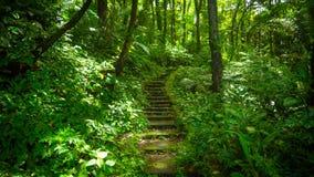Dichte Dschungel-Schritte lizenzfreie stockbilder