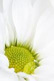 Dichte mening van witte bloem met waterdaling Royalty-vrije Stock Fotografie