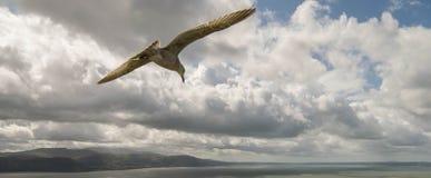 dichte mening van zeemeeuwvogel Stock Afbeelding