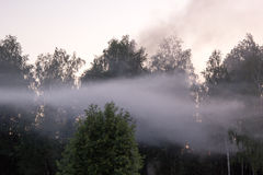 Dichte mist over bos bij zonsondergang Royalty-vrije Stock Afbeelding