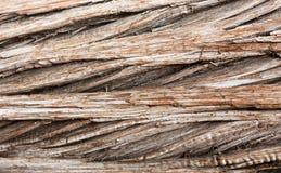 Dichte omhooggaand als achtergrond van de schors van de cederboomstam Royalty-vrije Stock Fotografie