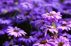 Dichte omhooggaand van Autumn Flowers. Stock Foto's