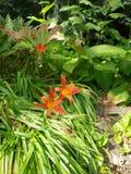 Dichte omhooggaand van bloemen in volledige bloei royalty-vrije stock foto's
