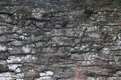 Dichte omhooggaand van de aard donkere bruine houten vlek Royalty-vrije Stock Afbeelding