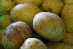 Dichte omhooggaand van de aardappel Royalty-vrije Stock Foto