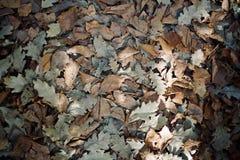 Dichte omhooggaand van de bladeren die op de grond tijdens daling leggen stock fotografie