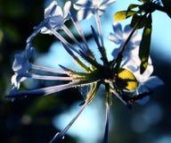 Dichte omhooggaand van de bloem Royalty-vrije Stock Afbeeldingen