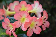 Dichte omhooggaand van de bloem Stock Foto