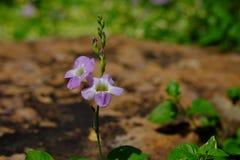 Dichte omhooggaand van de bloem Royalty-vrije Stock Foto's