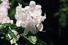 Dichte omhooggaand van de bloem Stock Foto's